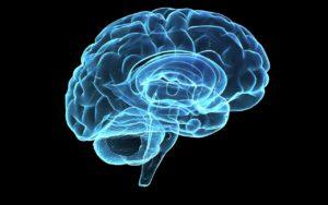 cerveau-lire