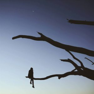 arbre-mort-super-chinois-801